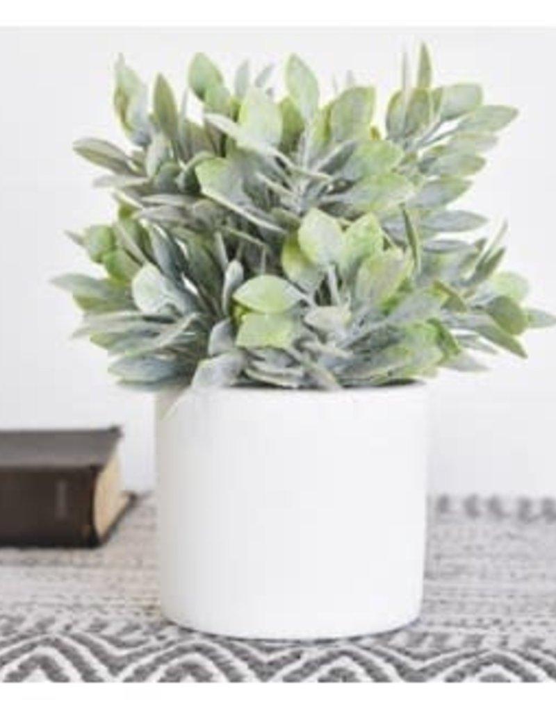 Green Bush with Pot
