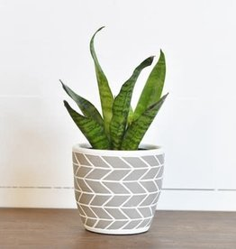 "4.75"" Arrow Stripe Pot"