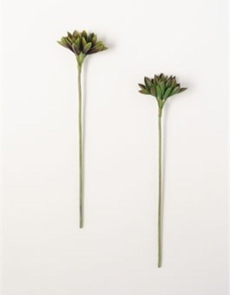 Succulent Stem
