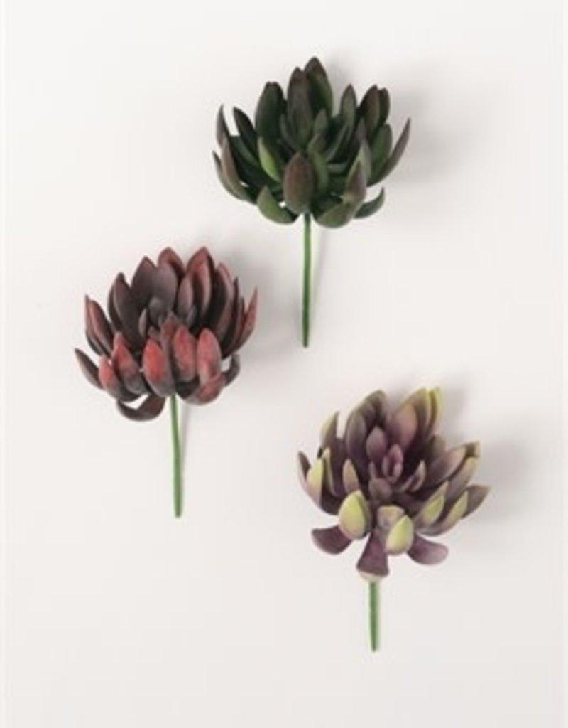 """Echeveria Succulent, 8""""H"""