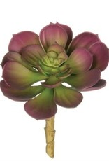 Kelsy Succulent