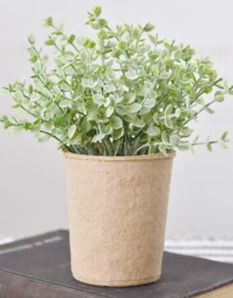 BABY LEAF PLANT IN PAPER POT