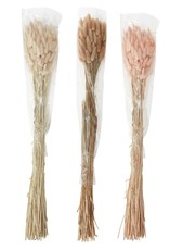 Lagrus Grass