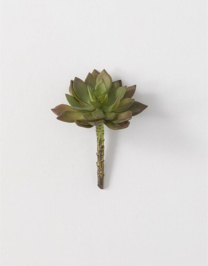"""Echeveria Succulent, 5.5""""H"""