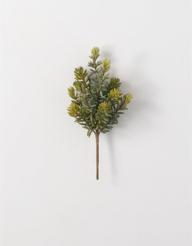 Lacey succulent