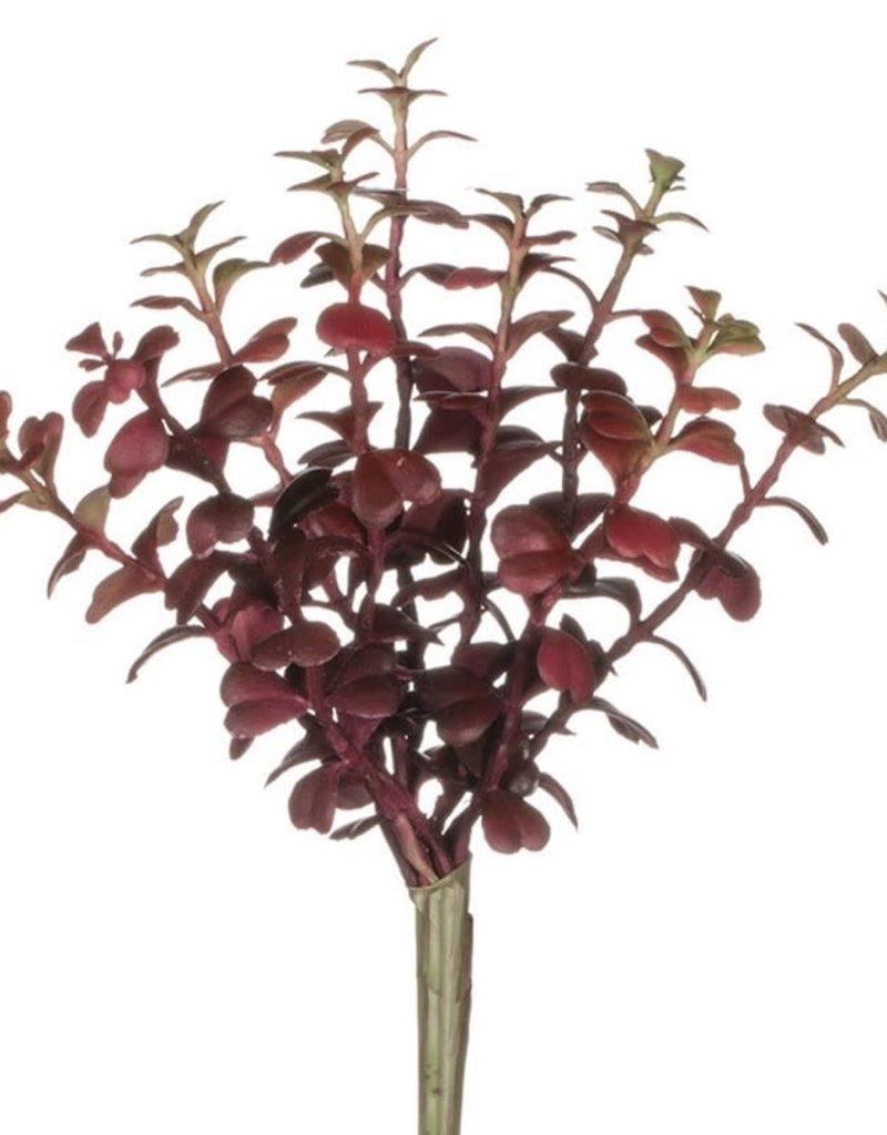 Aubrey Succulent