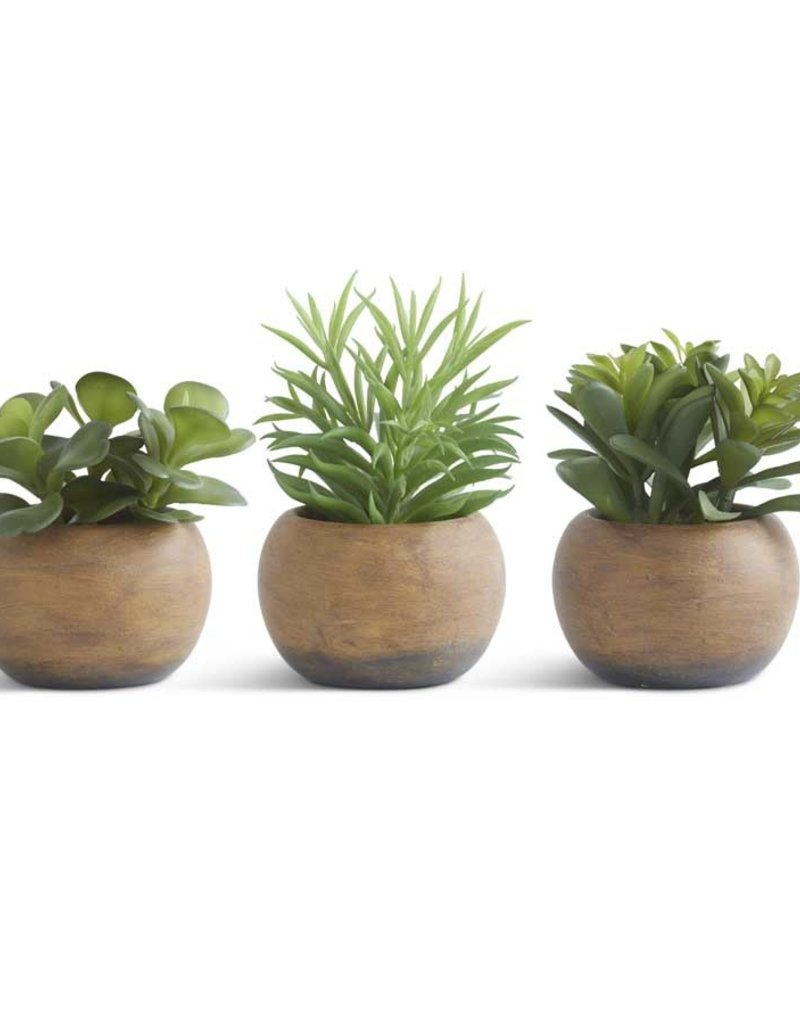 """5.5"""" Succulents in wood round pots"""