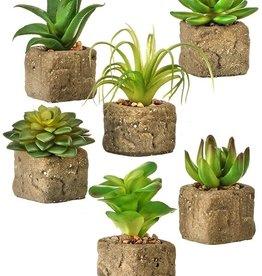 Succulent in Stone Pot
