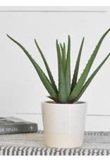 """Aloe Plant in Pot, 14.2""""H"""