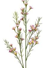 """21""""H Wax Flower, Pink"""