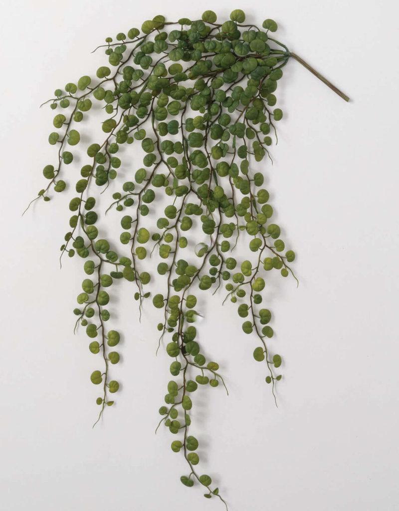 Hanging Leaf Bush
