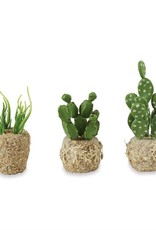 Cactus Drop Ins