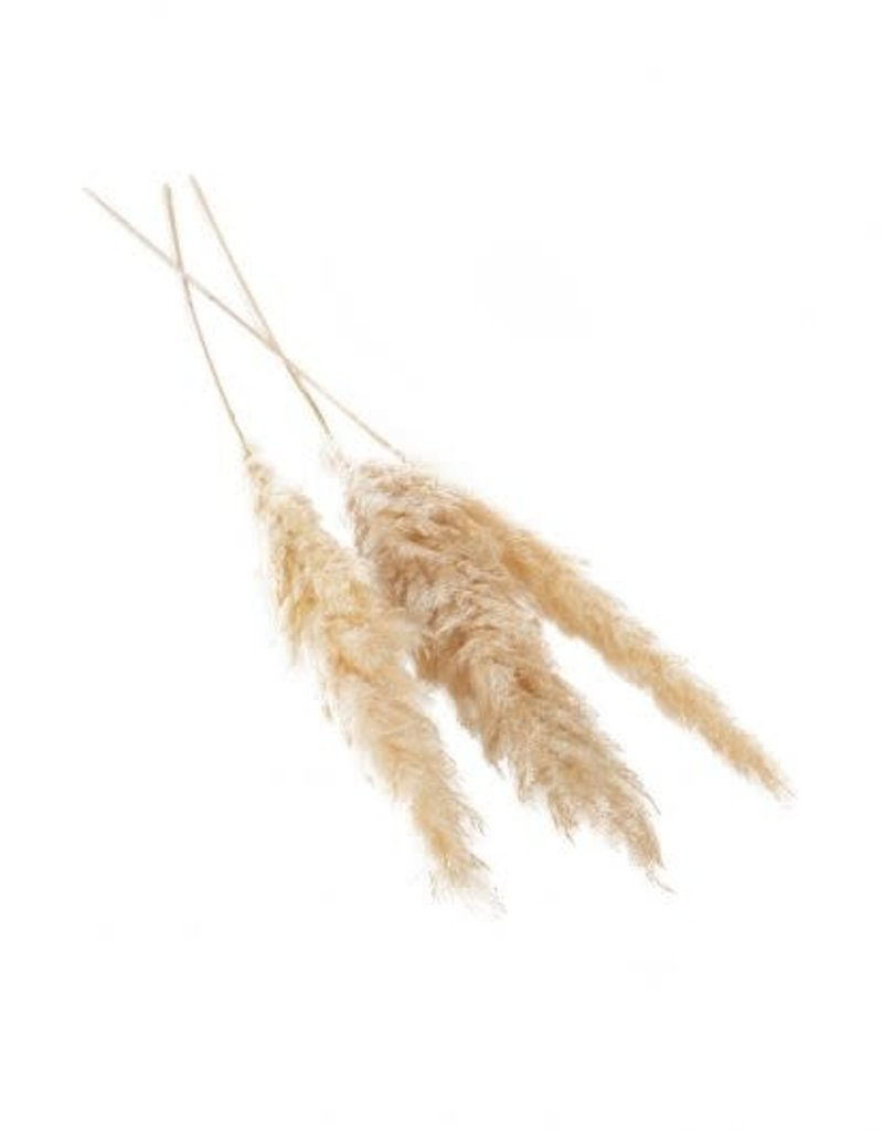 """47""""-53"""", S/3 Pampas Grass, Tan"""