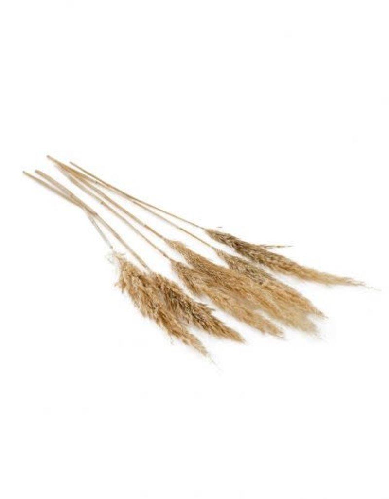 """25.5""""-28"""", S/6, Pampas Grass"""