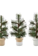 Mini Potted Pine Tree