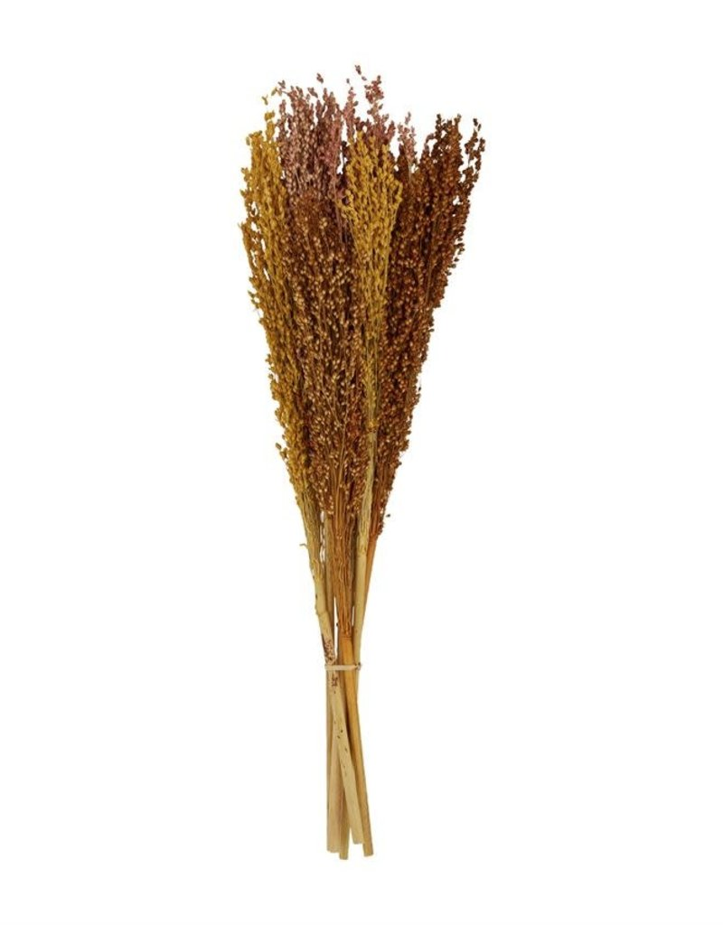 preserved sorghum bunch