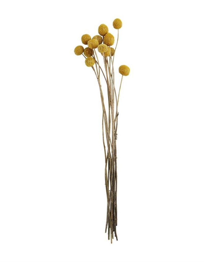 Dried Billy Buttons