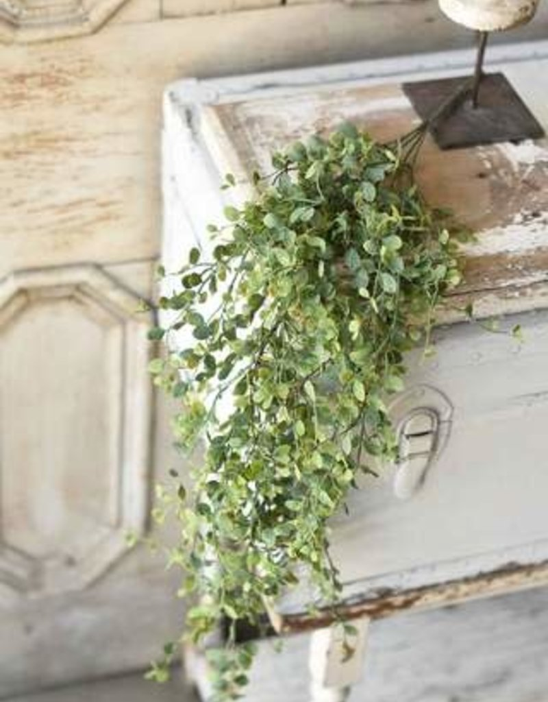 "Seraph Vine Hanging Bush, 34"""