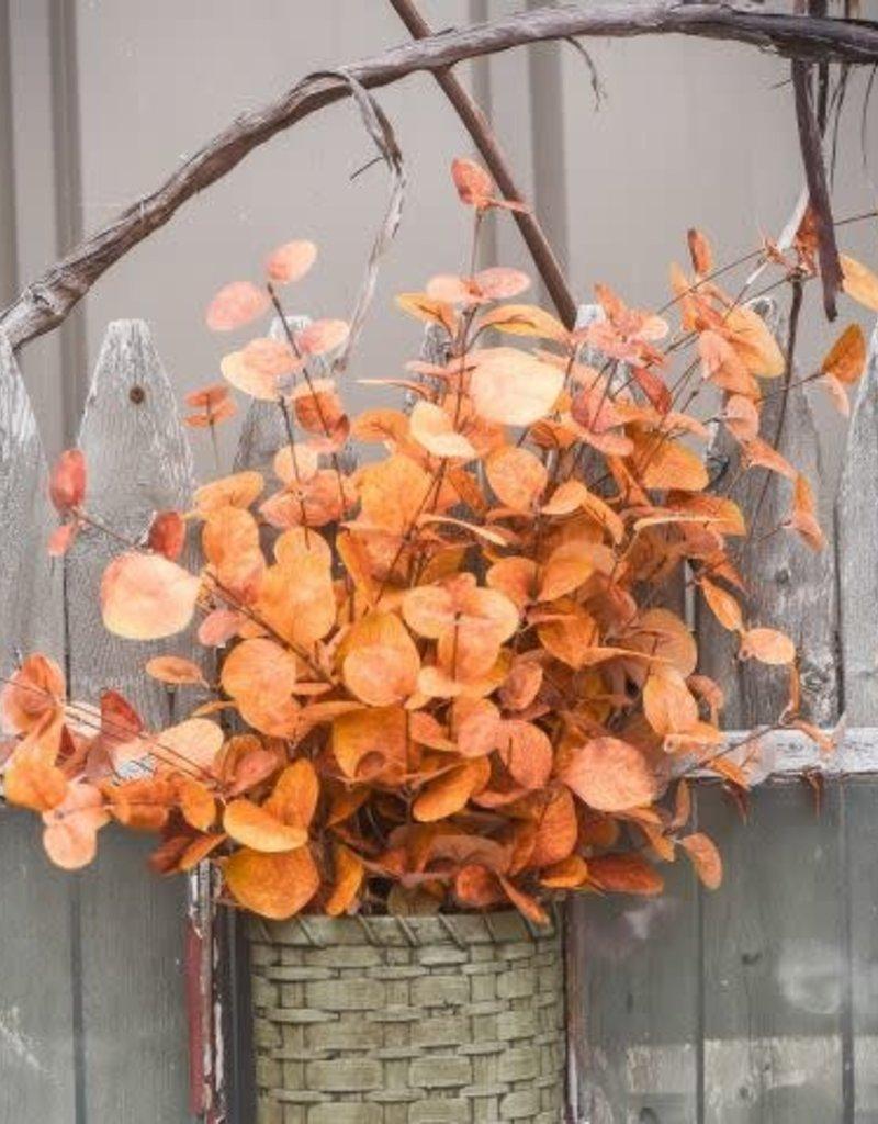 "36"" Rusty Orange Eucalyptus Spray"