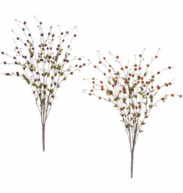 PussyWillow Bush