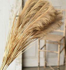 """42"""" Golden Grain Stem"""