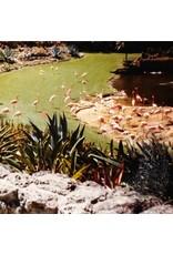 Field Imaginary Softwoods: Gold Fiction Loop Garden LP