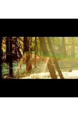 Glassnote Childish Gambino: Camp LP