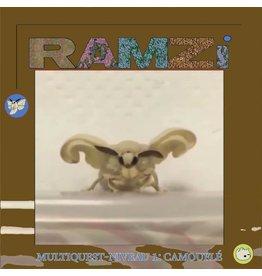 RAMZi: Multiquest Niveau 1: Camouflé  LP
