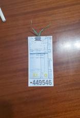 """17""""  Schwinn Mirada (5107 I1)"""
