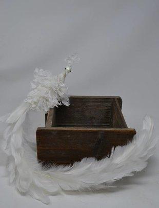 Clip on Winter Peacock