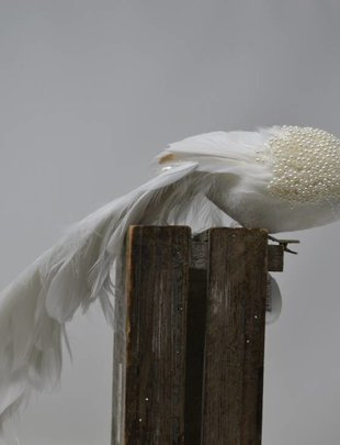 Clip-On Pearl Peacock