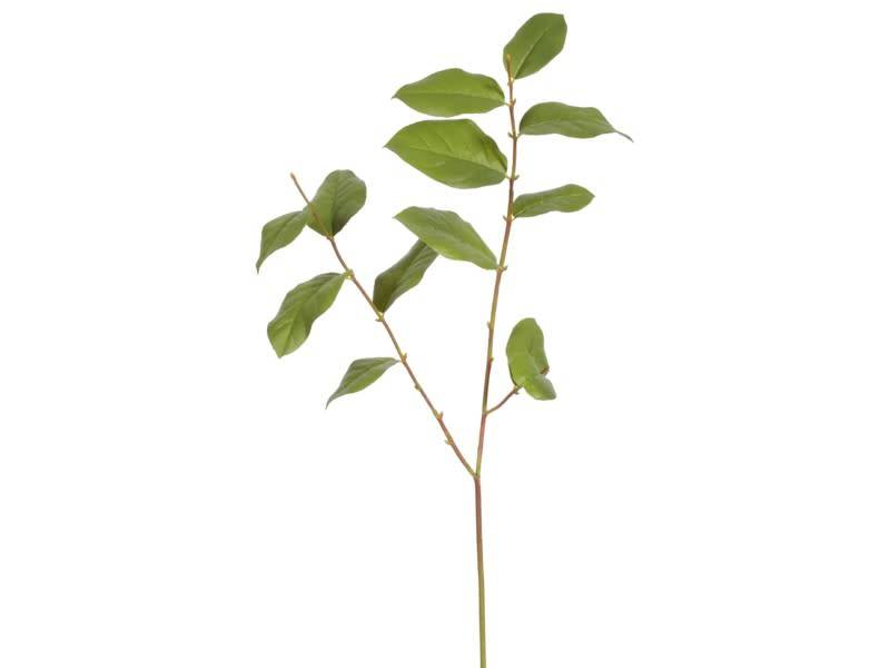 """35"""" Salal Leaf Spray"""