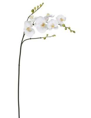 Large White Orchid w/ Buds