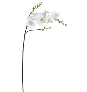 Large White Orchid Stem with Buds