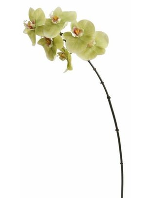 Small Orchid Stem (2 Colors)