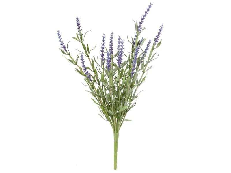 Small Lavender Bush