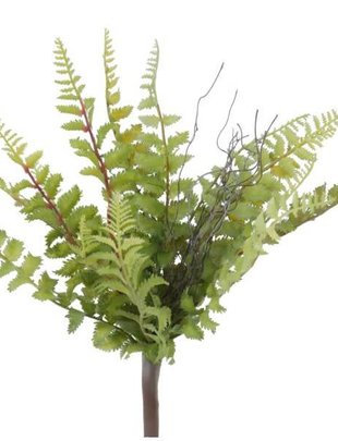 Tallon Fern Bush