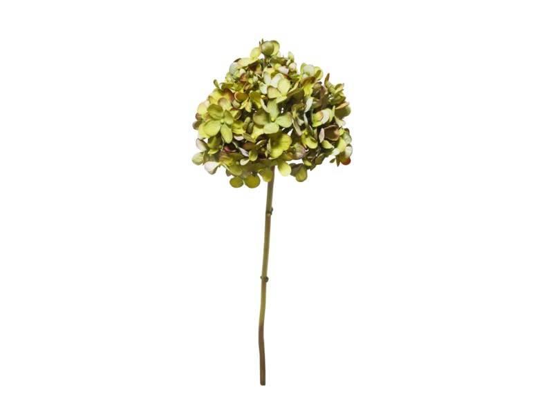 Rounded Petal Hydrangea