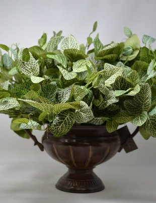 "15"" Fittonia Leaf Bush"