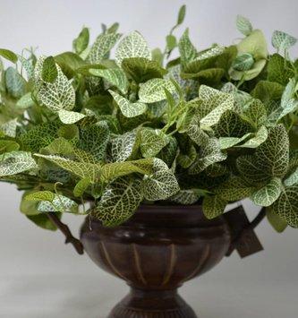 """15"""" Fittonia Leaf Bush"""