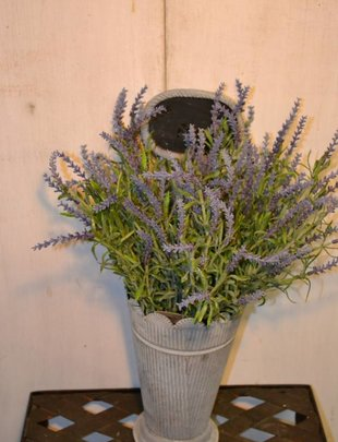 Small Lavender Bush