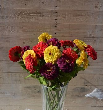 Large Zinnia Spray (4 Colors)