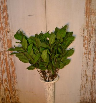 "35"" Salal Leaf Spray"