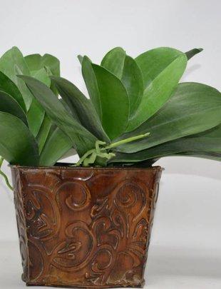 """13.5"""" Phalaenopsis Leaf Pick"""