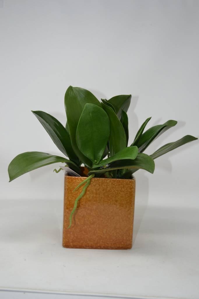 """7"""" Phalaenopsis Leaf Pick"""
