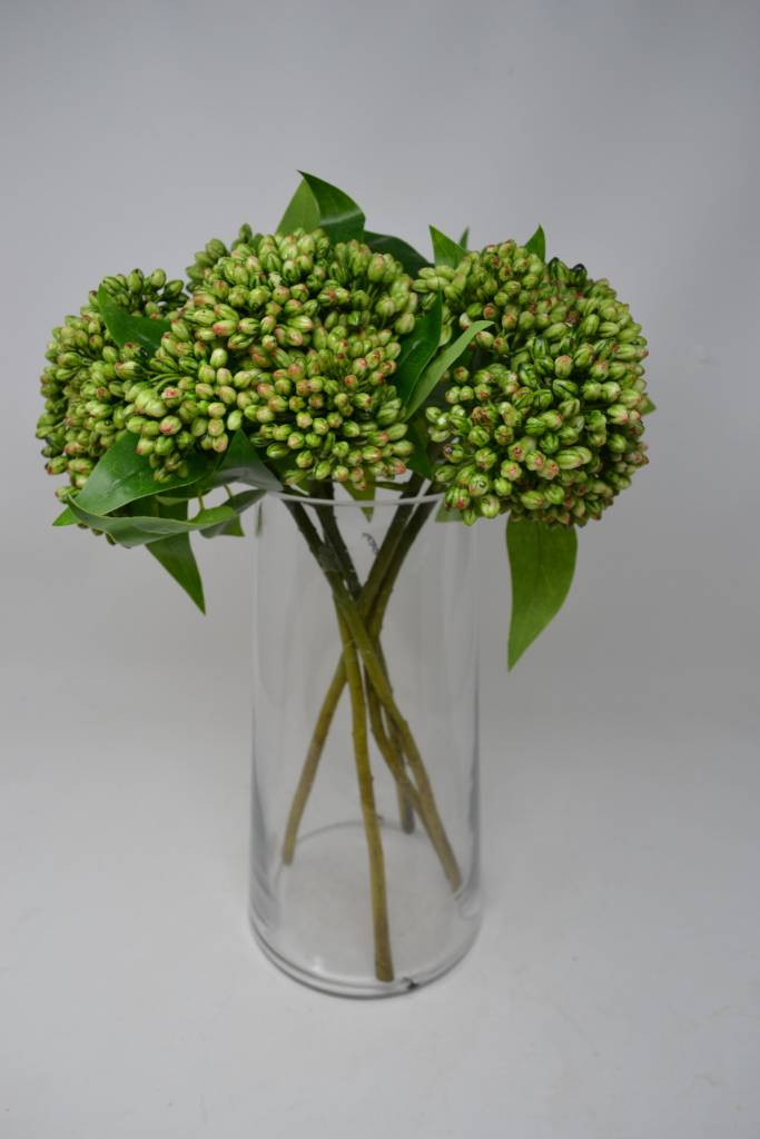 Large Sedum Spray