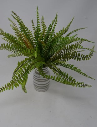 "12"" Sword Fern Bush"