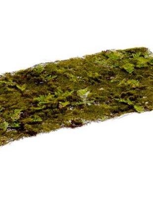 Moss Fern Sheet