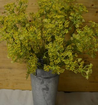 Yellow Dill Spray