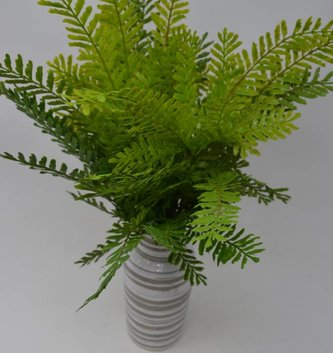 Fish Bone Fern Bush